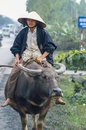 Ride out centra vietnam january th vietnamese boy with traditional ricestraw hat rides on a water buffalo Royalty Free Stock Image