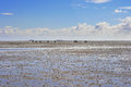 Riders in wadden sea at low tide Royalty Free Stock Photo