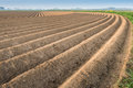 Ridges after planting the seed potatoes curved of soil in dutch farmland Stock Photography