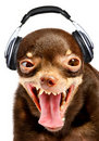Ridiculous dog DJ. Stock Photos
