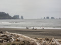 Riding bicycles on the beach a group of people their in olympic national park washington Royalty Free Stock Photo