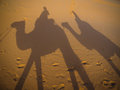 Riding camels in the Sahara desert, with shadows Royalty Free Stock Photo