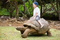 Riding Giant Turtle Royalty Free Stock Photo