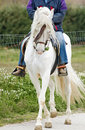 Riding rider walking through the field in his elegant spanish horse pre Royalty Free Stock Image