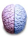 Mozek lesbička