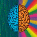 Right and left brain differences between cerebral hemispheres Stock Photo