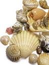 Right seashells on white Royalty Free Stock Photos