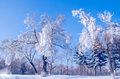 Rime also known as is a kind of cold weather in northern china and other places trees water vapor after experiencing a Royalty Free Stock Image