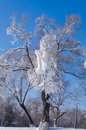 Rime beautiful tree in harbin in winter Royalty Free Stock Photography