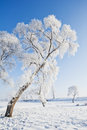 Rime is cold mist and vapor condenses on the ice leaves divided into two kinds of granular and crystalline granular compact Stock Photography