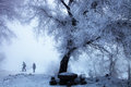 Rime tree a lonely stood in the snow field by the songhua river in north china Stock Photography