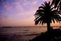 Rincon island palm tree sunset silhouette of a and a bridge leading to off the coast of california Royalty Free Stock Photo