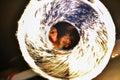 Ring of fire at Burning man festival