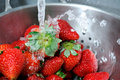 Rinsing Strawberries Stock Images