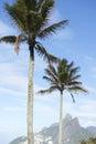 Rio de janeiro palm trees two broersberg brazilië Stock Afbeelding