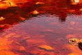 The Rio Tinto (red river) Royalty Free Stock Photo
