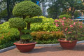 A riot of greenery in the central park of ho chi minh city dwarf trees and flower beds finery Stock Images
