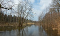 Riparian stand flooded in springtime bialowieza forest morning Stock Photography