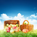 Ripe apples in a basket against blue sky with clouds Royalty Free Stock Photos
