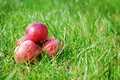 Ripe apples in the grass Stock Image