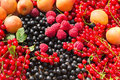 Ripe Apricot, Raspberry, Red and Black Currant Royalty Free Stock Photo