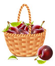 Ripe apricots in the basket. Stock Photo