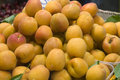 Ripe apricots pile of for sale in market Royalty Free Stock Photography