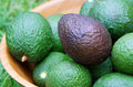 Ripe avocado avocados of the hass variety in a bowl one is black in contrast of the others green which are still ripening Royalty Free Stock Photos