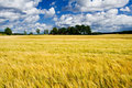 Ripe barley field with a farme Stock Photo