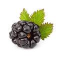 Ripe blackberry with leaf Royalty Free Stock Photo