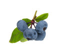 Ripe blueberries Royalty Free Stock Image
