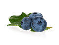 Ripe blueberries Royalty Free Stock Photo