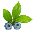 Ripe blueberries Stock Photography
