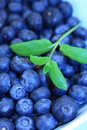 Ripe blueberries in the blue bowl Royalty Free Stock Images