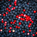 Ripe blueberries and cranberries for background Royalty Free Stock Photography