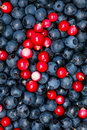 Ripe blueberries and cranberries for background Royalty Free Stock Image