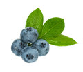 Ripe blueberries fresh with leaves isolated on white background cutout Royalty Free Stock Images
