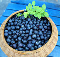 Ripe blueberries in a small basket Royalty Free Stock Photo