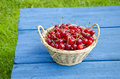 Ripe cherries in wicker basket on blue table sweet Royalty Free Stock Photography
