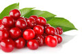 Ripe cherry with green leaves Stock Image
