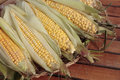 Ripe corn cob in autumn Stock Photos