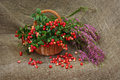 Of ripe cranberries and a branch of Heather. Still life. Royalty Free Stock Photo