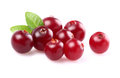 Ripe cranberry with leaf in closeup Stock Image