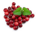 Ripe cranberry with a mint Stock Image