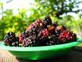 Ripe dark berries of mulberry on a plate image Royalty Free Stock Image