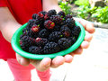 Ripe dark berries of a mulberry on plate image in the hands Stock Photo