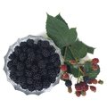 Ripe dewberry in a bowl and a branch with berries top view Stock Image