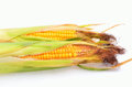 Ripe ears of corn Royalty Free Stock Photos