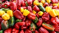 Ripe, fresh bell peppers displayed at a farm market stall Royalty Free Stock Photo