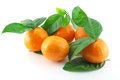 Ripe fresh mandarines Stock Photography
